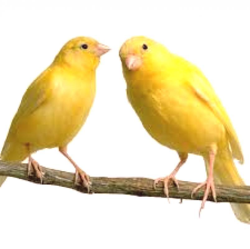 stříkat na toho ptáka