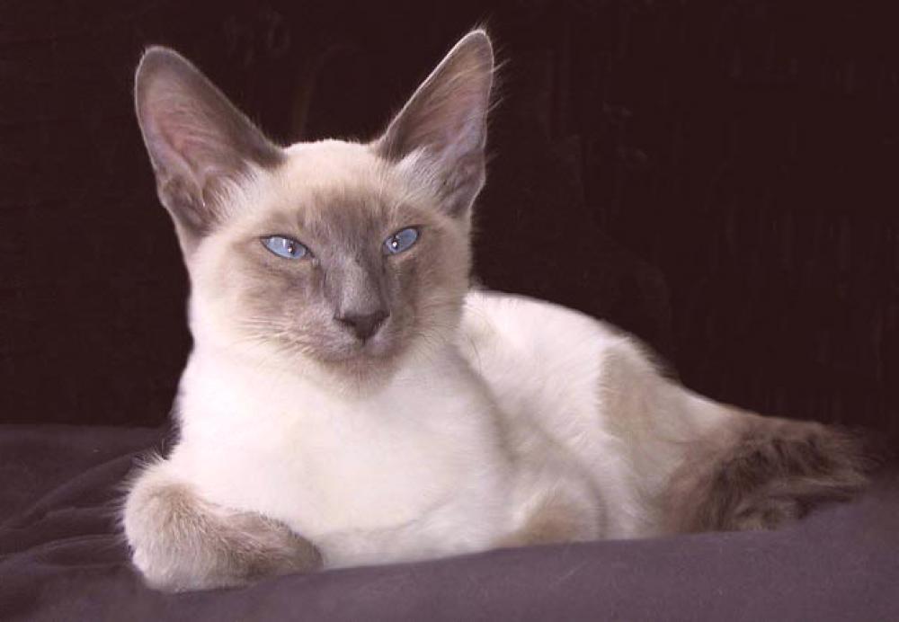 Fotografije uskih maca