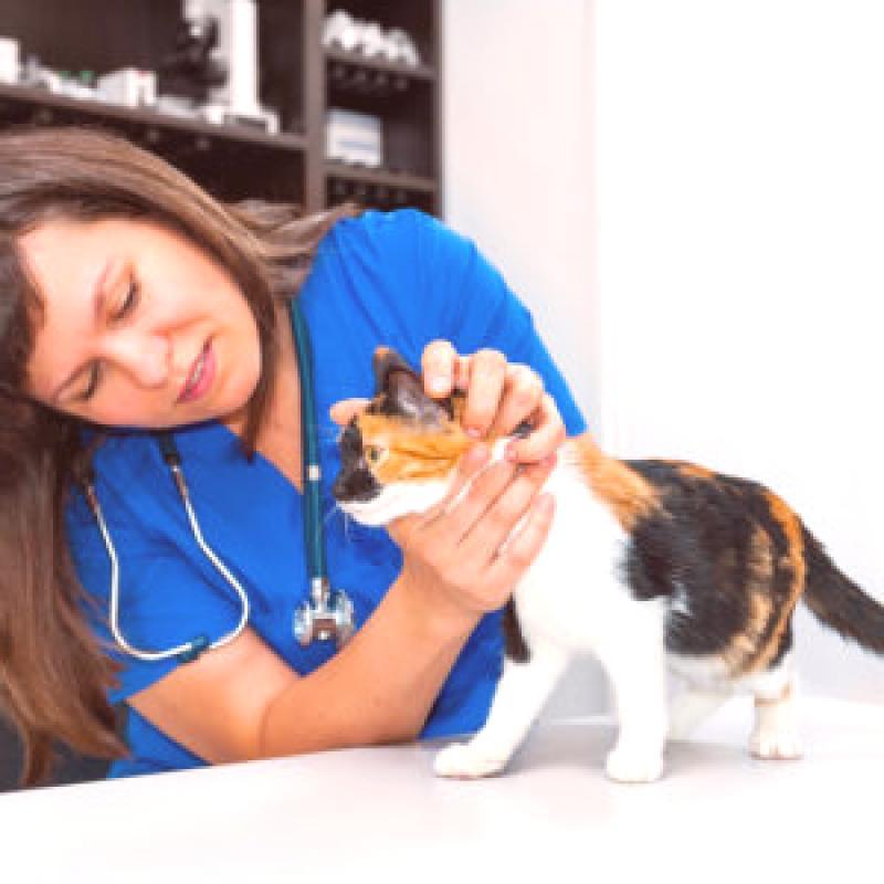 Tumblr mladá těsná kočička