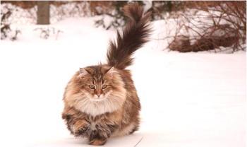 Fotografije maca bez kose